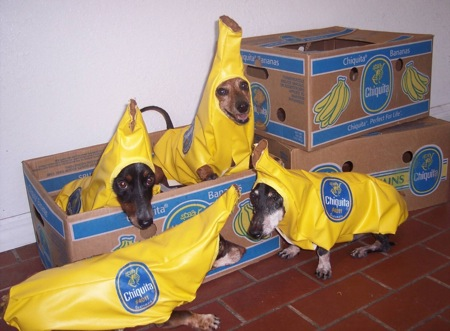 Hmmm, there's something strange about this shipment of Chiquita Bananas.