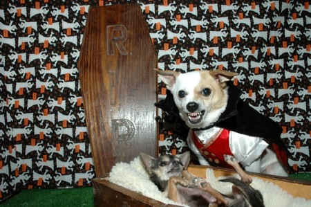 dogs-in-coffin-and-dracula-costume.jpg